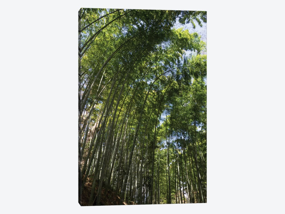 Low Angle View Of Bamboo Trees, Chuson-Ji, Hiraizumi, Iwate Prefecture, Japan 1-piece Canvas Art Print