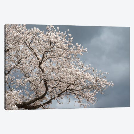 Low Angle View Of Cherry Tree Blossom Against Cloudy Sky, Kitakami, Iwate Prefecture, Japan Canvas Print #PIM14725} by Panoramic Images Art Print