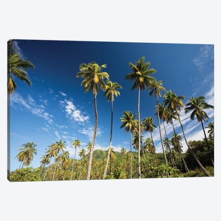 Low Angle View Of Palm Trees, Moorea, Tahiti, French Polynesia Canvas Print #PIM14730} by Panoramic Images Canvas Art Print