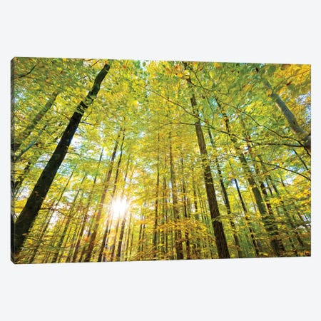 Low Angle View Of Sun Shining Through Trees, Baden-Württemberg, Germany Canvas Print #PIM14733} by Panoramic Images Canvas Art Print