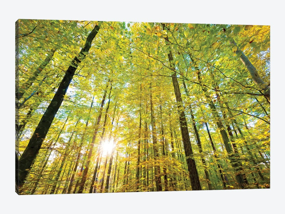 Low Angle View Of Sun Shining Through Trees, Baden-Württemberg, Germany 1-piece Art Print