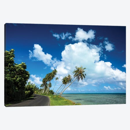 Palm Tree Along A Road At The Oceanside, Bora Bora, Society Islands, French Polynesia Canvas Print #PIM14762} by Panoramic Images Canvas Artwork