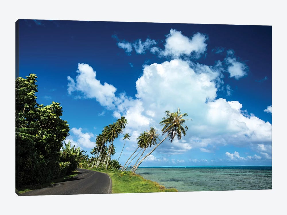 Palm Tree Along A Road At The Oceanside, Bora Bora, Society Islands, French Polynesia 1-piece Art Print