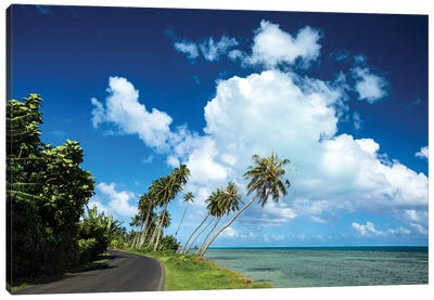 Palm Tree Along A Road At The Oceanside, Bora Bora, Society Islands, French Polynesia Canvas Art Print