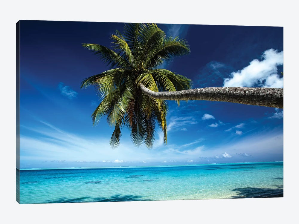 Palm Tree Bending Over The Beach, Bora Bora, Society Islands, French Polynesia by Panoramic Images 1-piece Canvas Wall Art
