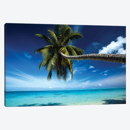 Palm Tree Bending Over The Beach, Bora Bora, Society Islands, French Polynesia Canvas Print #PIM14763} by Panoramic Images Canvas Artwork