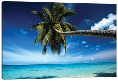 Palm Tree Bending Over The Beach, Bora Bora, Society Islands, French Polynesia Canvas Art Print