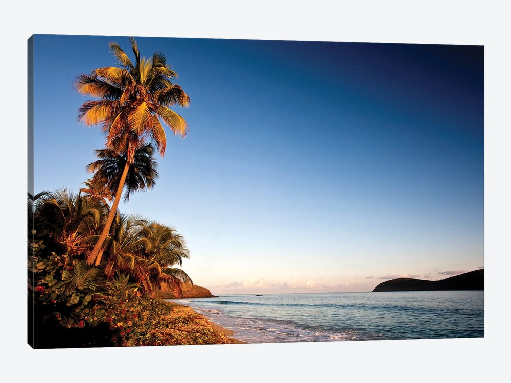 Palm Tree On Beach At Sunset, Culebra Island, Puerto Rico by Panoramic Images 1-piece Canvas Print