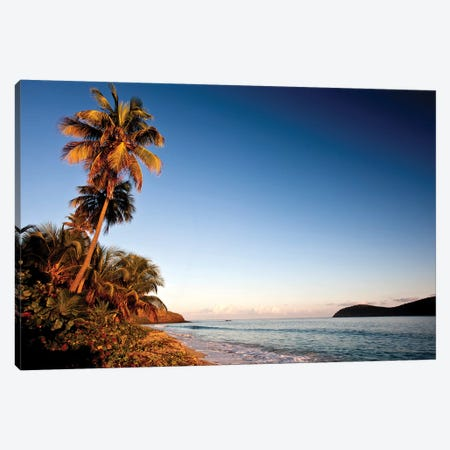 Palm Tree On Beach At Sunset, Culebra Island, Puerto Rico 3-Piece Canvas #PIM14764} by Panoramic Images Canvas Print