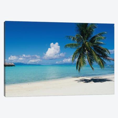 Palm Tree On The Beach, Moana Beach, Bora Bora, Tahiti, French Polynesia Canvas Print #PIM14765} by Panoramic Images Canvas Art Print