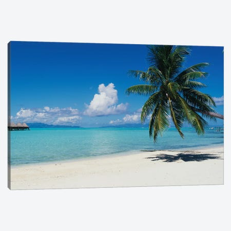 Palm Tree On The Beach, Moana Beach, Bora Bora, Tahiti, French Polynesia Canvas Print #PIM14765} by Panoramic Images Canvas Art Print
