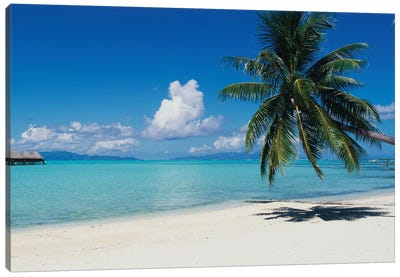 Palm Tree On The Beach, Moana Beach, Bora Bora, Tahiti, French Polynesia Canvas Art Print