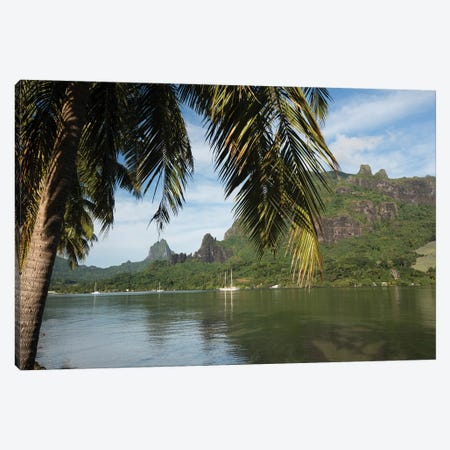 Palm Tree With Boat In The Background, Moorea, Tahiti, French Polynesia II Canvas Print #PIM14767} by Panoramic Images Canvas Print