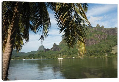 Palm Tree With Boat In The Background, Moorea, Tahiti, French Polynesia II Canvas Art Print