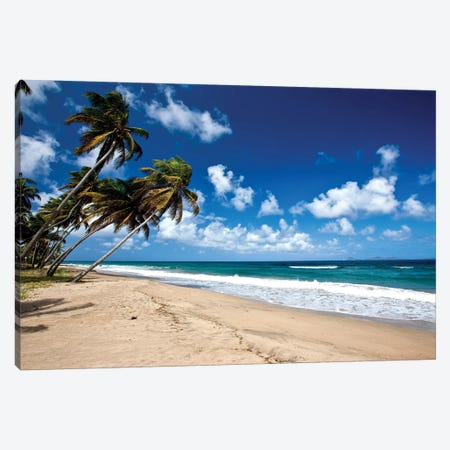 Palm Trees Along The Beach, Grenada, Caribbean Canvas Print #PIM14769} by Panoramic Images Canvas Art