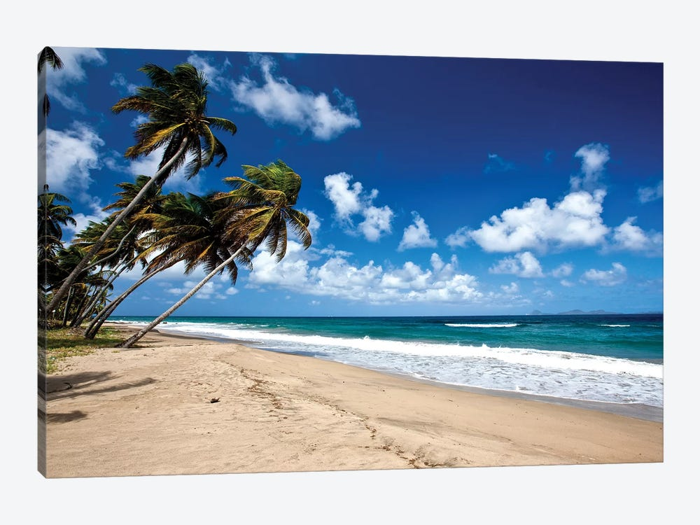 Palm Trees Along The Beach, Grenada, Caribbean by Panoramic Images 1-piece Canvas Art