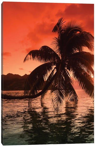 Palm Trees At Sunset, Moorea, Tahiti, French Polynesia I Canvas Art Print
