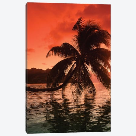 Palm Trees At Sunset, Moorea, Tahiti, French Polynesia I Canvas Print #PIM14771} by Panoramic Images Canvas Art Print