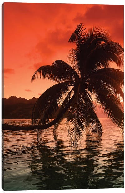 Palm Trees At Sunset, Moorea, Tahiti, French Polynesia I Canvas Art Print