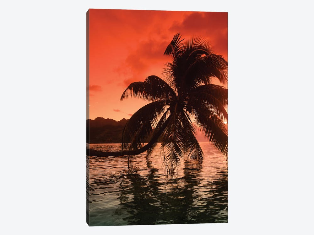 Palm Trees At Sunset, Moorea, Tahiti, French Polynesia I by Panoramic Images 1-piece Canvas Print