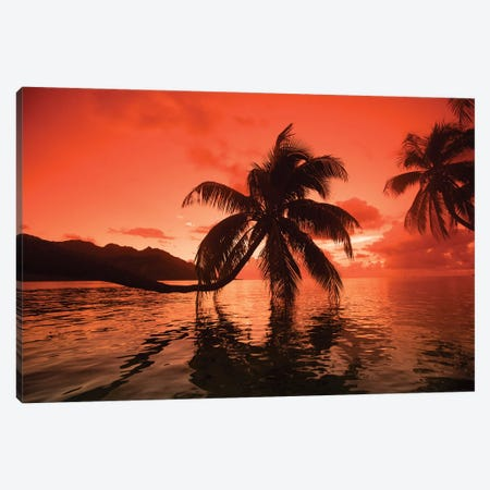 Palm Trees At Sunset, Moorea, Tahiti, French Polynesia II Canvas Print #PIM14772} by Panoramic Images Canvas Art Print