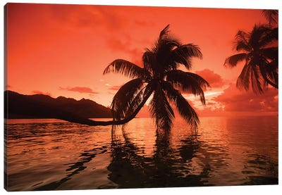 Palm Trees At Sunset, Moorea, Tahiti, French Polynesia II Canvas Art Print