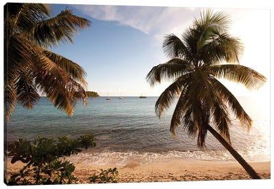 Palm Trees On Beach At Sunset, Culebra Island, Puerto Rico Canvas Art Print