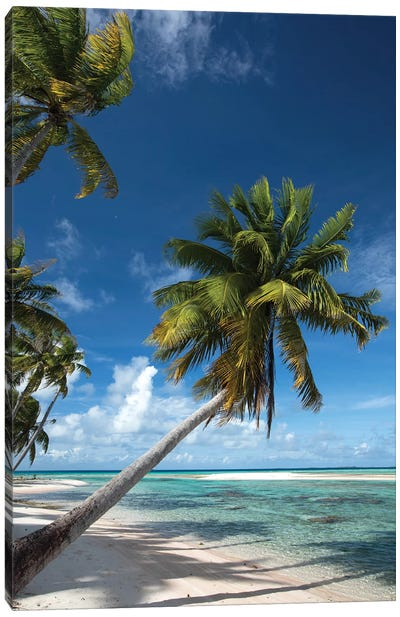 Palm Trees On The Beach, Bora Bora, Society Islands, French Polynesia I Canvas Art Print