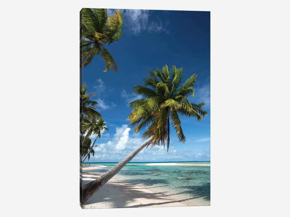 Palm Trees On The Beach, Bora Bora, Society Islands, French Polynesia I by Panoramic Images 1-piece Canvas Wall Art