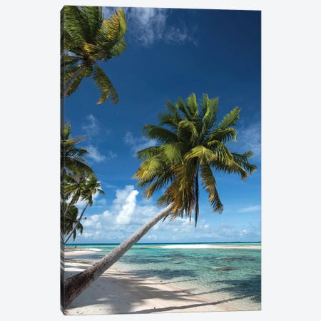 Palm Trees On The Beach, Bora Bora, Society Islands, French Polynesia I Canvas Print #PIM14774} by Panoramic Images Canvas Wall Art