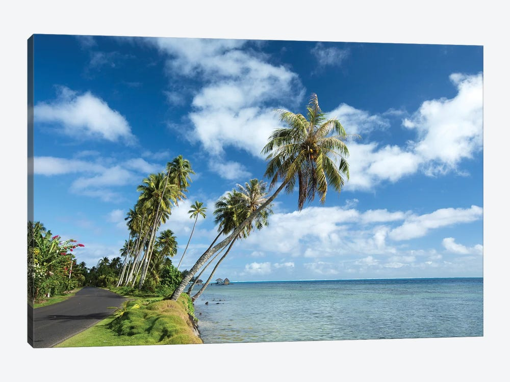 Palm Trees On The Beach, Bora Bora, Society Islands, French Polynesia II by Panoramic Images 1-piece Canvas Art Print