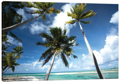 Palm Trees On The Beach, Bora Bora, Society Islands, French Polynesia III Canvas Art Print