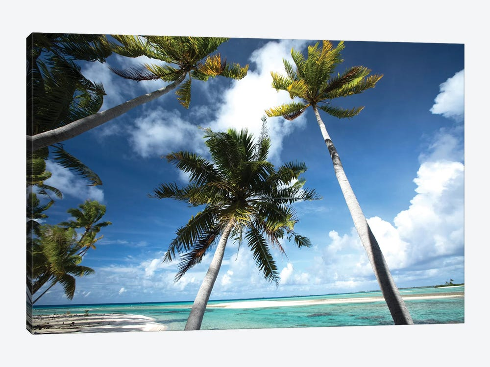 Palm Trees On The Beach, Bora Bora, Society Islands, French Polynesia III by Panoramic Images 1-piece Canvas Wall Art