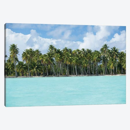 Palm Trees On The Beach, Bora Bora, Society Islands, French Polynesia IV Canvas Print #PIM14777} by Panoramic Images Canvas Art