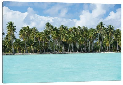 Palm Trees On The Beach, Bora Bora, Society Islands, French Polynesia IV Canvas Art Print
