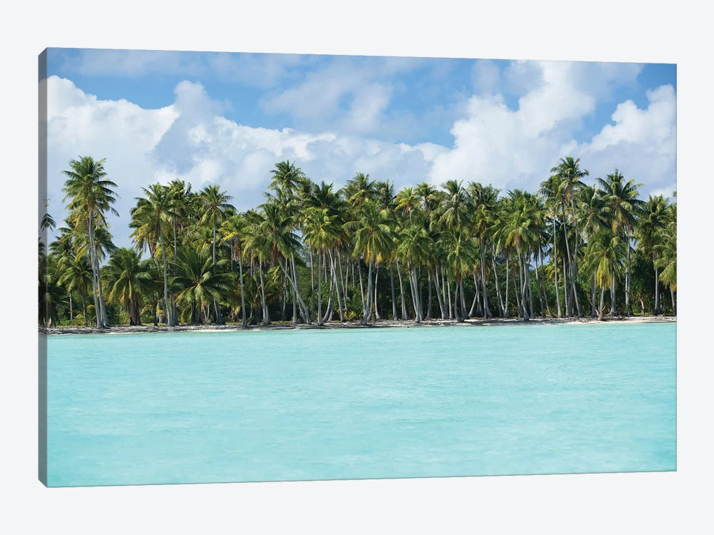 Palm Trees On The Beach, Bora Bora, Society Islands, French Polynesia IV by Panoramic Images 1-piece Canvas Print