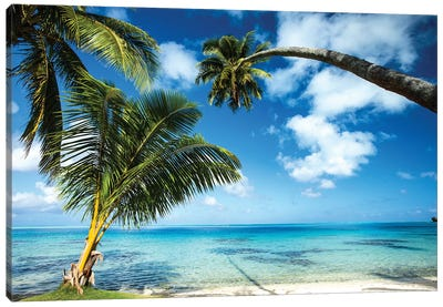 Palm Trees On The Beach, Bora Bora, Society Islands, French Polynesia V Canvas Art Print