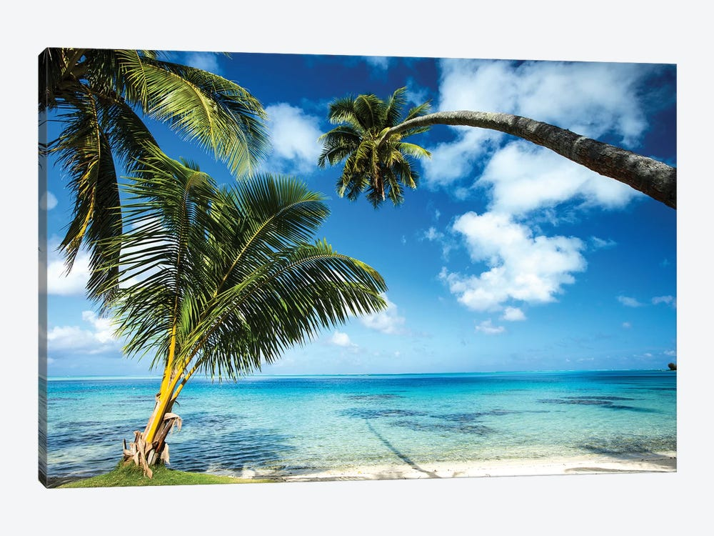 Palm Trees On The Beach, Bora Bora, Society Islands, French Polynesia V by Panoramic Images 1-piece Canvas Artwork
