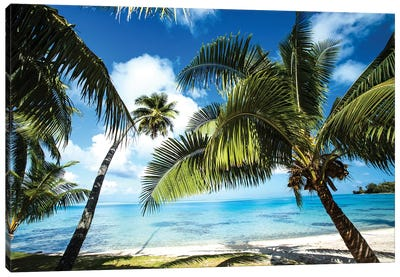 Palm Trees On The Beach, Bora Bora, Society Islands, French Polynesia VI Canvas Art Print