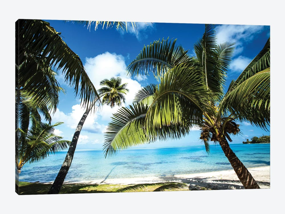 Palm Trees On The Beach, Bora Bora, Society Islands, French Polynesia VI by Panoramic Images 1-piece Canvas Art Print