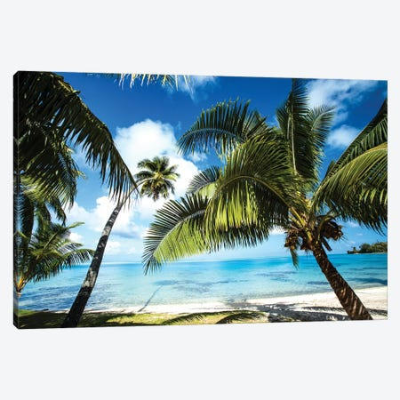 Palm Trees On The Beach, Bora Bora, Society Islands, French Polynesia VI Canvas Print #PIM14779} by Panoramic Images Canvas Print