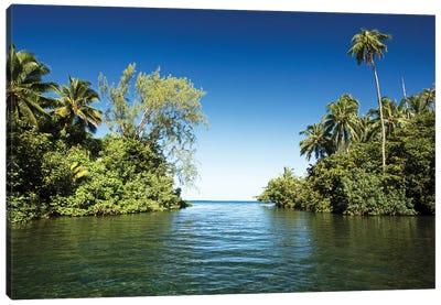 Palm Trees On The Coast, Moorea, Tahiti, French Polynesia Canvas Art Print