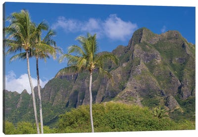 Palm Trees With Mountain Range In The Background, Tahiti, French Polynesia I Canvas Art Print