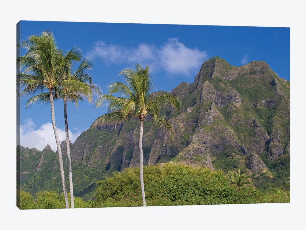 Palm Trees With Mountain Range In The Background, Tahiti, French Polynesia I 1-piece Canvas Wall Art