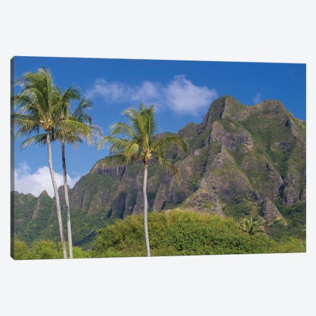 Palm Trees With Mountain Range In The Background, Tahiti, French Polynesia I Canvas Print #PIM14783} by Panoramic Images Canvas Wall Art