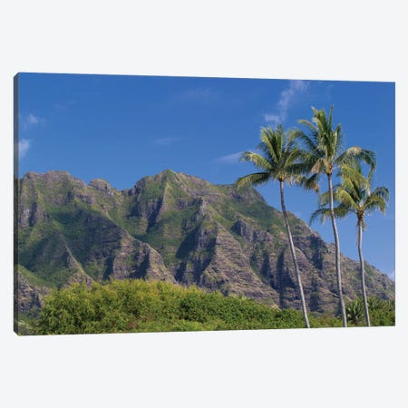 Palm Trees With Mountain Range In The Background, Tahiti, French Polynesia II Canvas Print #PIM14784} by Panoramic Images Canvas Print