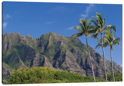 Palm Trees With Mountain Range In The Background, Tahiti, French Polynesia II Canvas Art Print