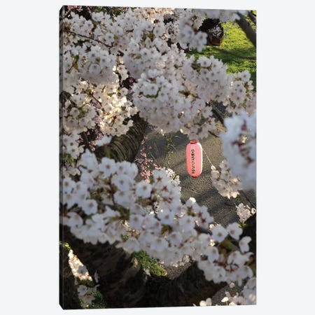 Pink Lantern Seen Through Cherry Blossoms Along Kitakami River, Kitakami, Iwate Prefecture, Japan Canvas Print #PIM14794} by Panoramic Images Canvas Artwork
