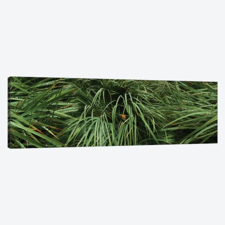 Raindrop On Grass Canvas Print #PIM14806} by Panoramic Images Canvas Artwork