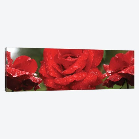 Raindrops On Red Rose Flowers Canvas Print #PIM14809} by Panoramic Images Canvas Art Print